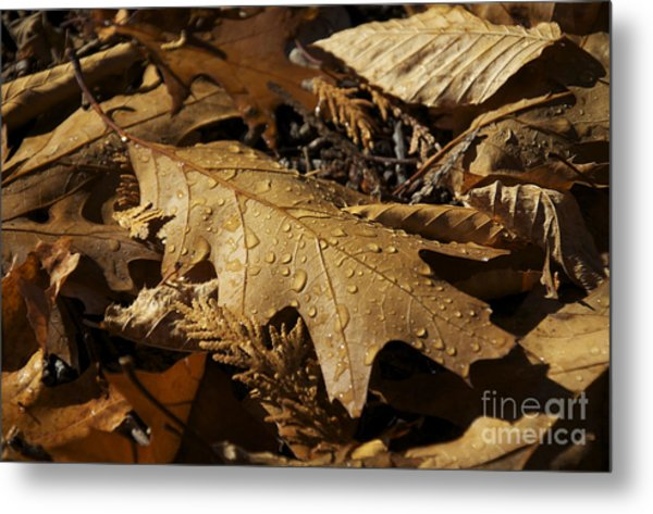 Autumn Leaf At Dawn Metal Print
