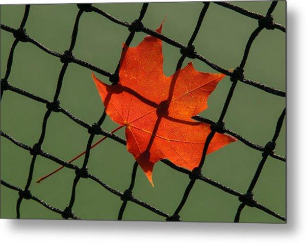 Autumn Leaf In Net Metal Print
