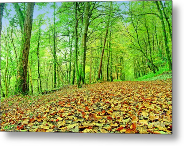 Autumn Leaves Metal Print by Frank Anthony Lynott