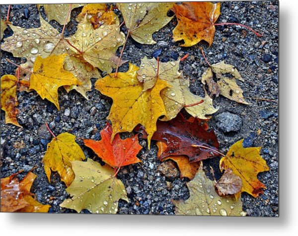 Autumn Leaves In Rain Metal Print
