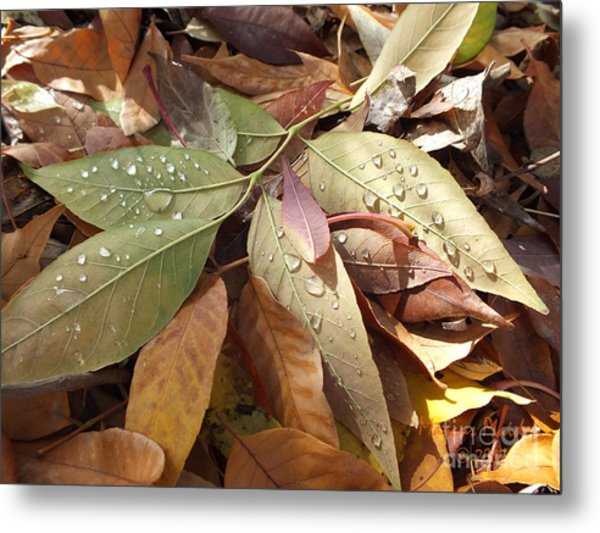 Autumn Leaves Metal Print by  Marcus Maiden