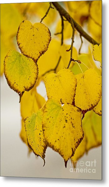 Autumn Leaves Metal Print by Nick  Boren