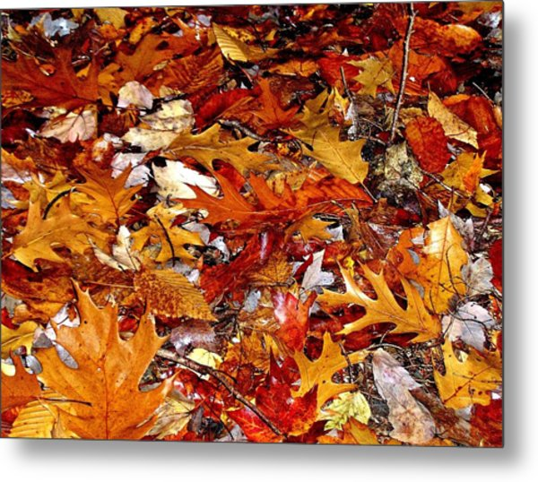 Autumn Leaves On The Ground In New Hampshire - Bright Colors Metal Print
