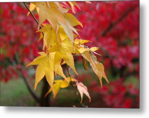 Autumn Leaves Metal Print by Tony Serzin