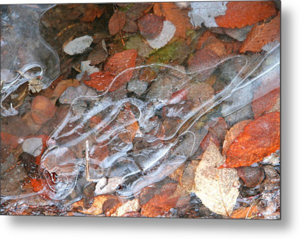 Autumn Leaves Under Ice Metal Print by Carolyn Reinhart