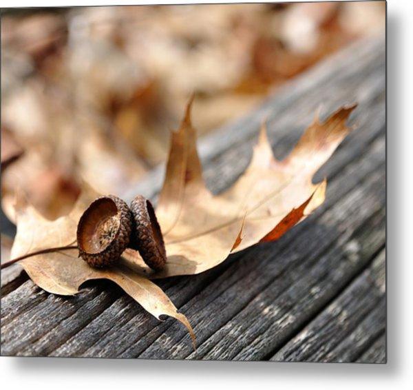 Autumn Leaves With Acorn Caps 002 Metal Print