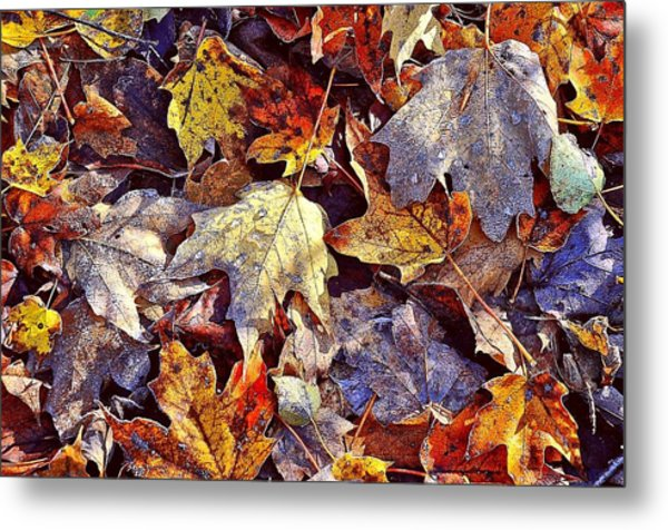 Autumn Leaves With Frost Metal Print