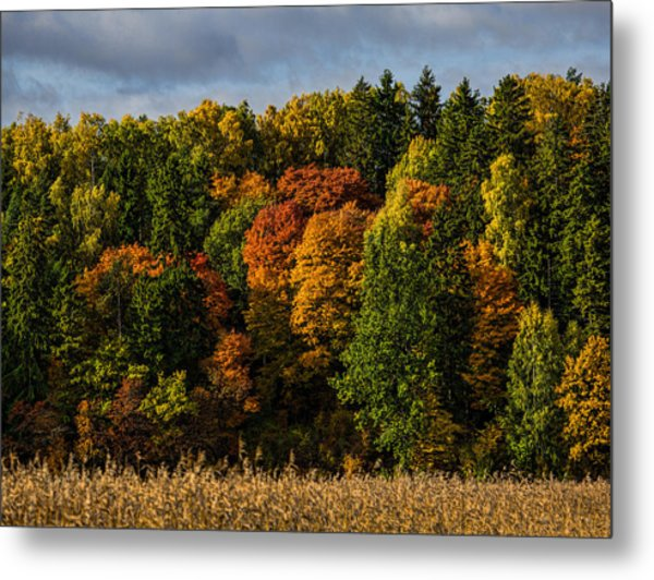 Metal Print featuring the photograph Autumn by Leif Sohlman