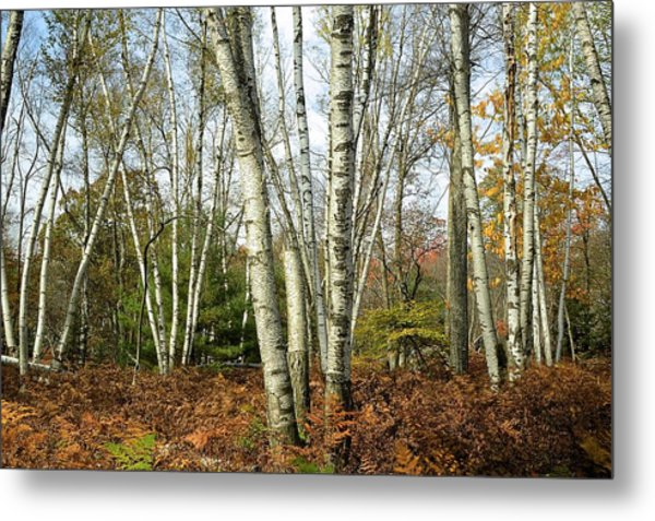 Autumn Majesty - Marion Brooks Natural Area Metal Print
