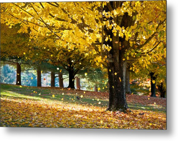 Autumn Maple Tree Fall Foliage - Wonderland Metal Print