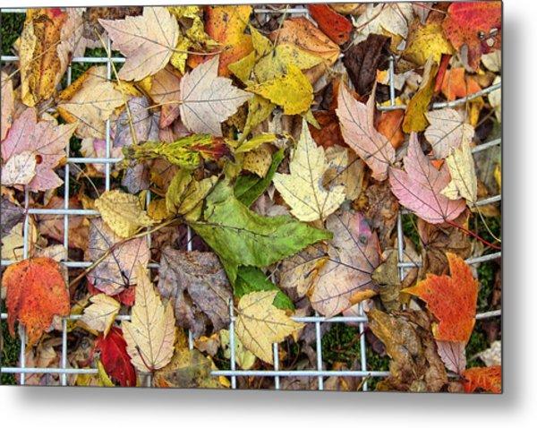 Autumn Medley Metal Print