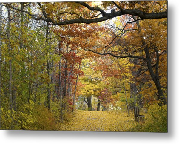 Autumn Nature Trail Metal Print