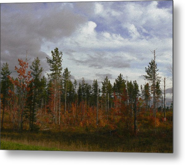 Autumn On Forest Edge Metal Print