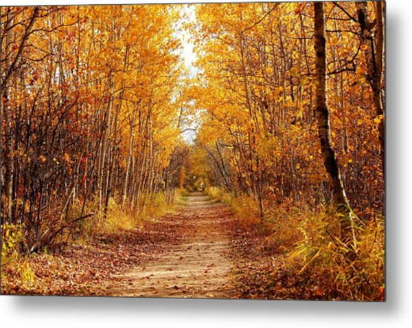 Autumn On The Harte Trail Metal Print