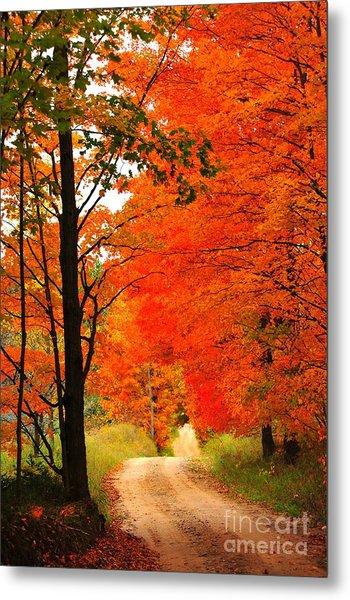 Autumn Orange 2 Metal Print