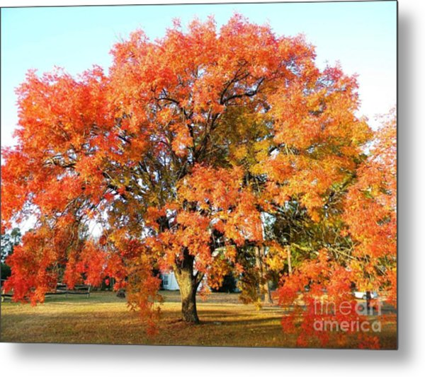 Autumn Orange Metal Print