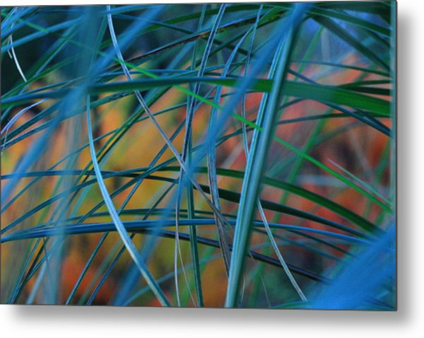 Autumn Pampas Grass Metal Print by Rebeka Dove