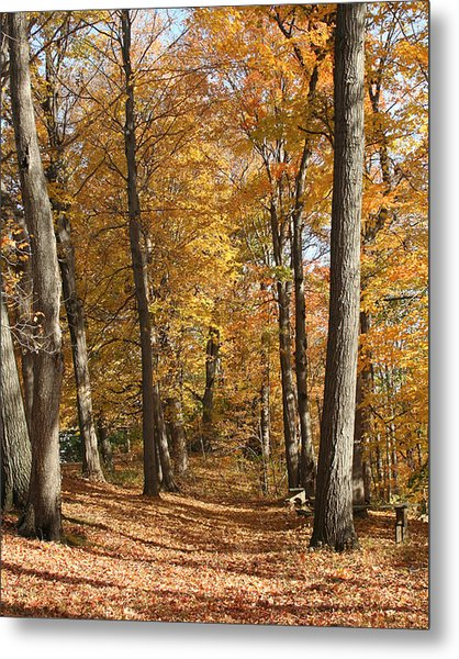 Autumn Path Metal Print