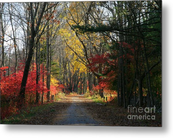 Autumn Paths    No.2 Metal Print
