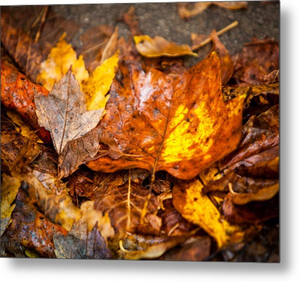 Autumn Pile Metal Print