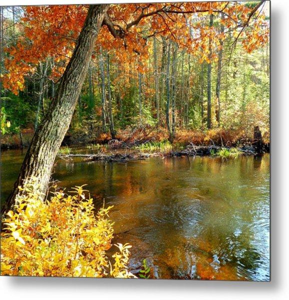 Autumn Pond Metal Print by Elaine Franklin