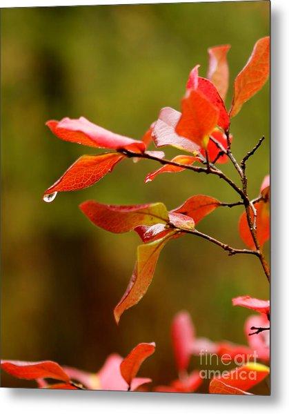 Autumn Raindrop Metal Print