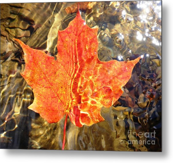 Metal Print featuring the photograph Autumn Reflections by Cristina Stefan