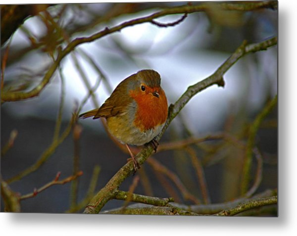 Autumn Robin Metal Print