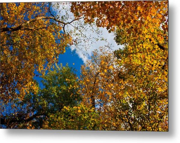 Autumn Sky Metal Print by Claus Siebenhaar