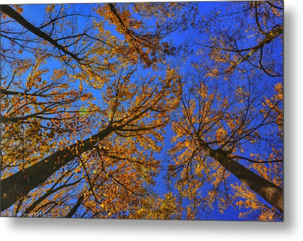 Autumn Sky Metal Print by Kathi Isserman