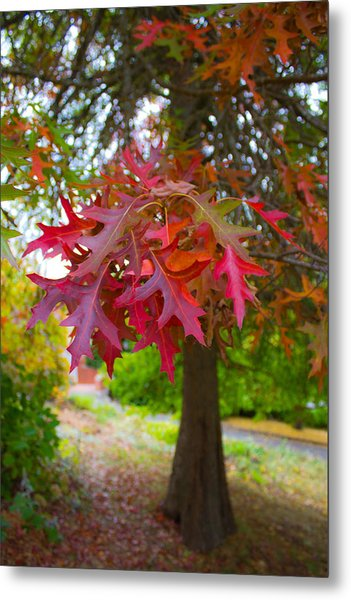 Autumn Splendor Metal Print by Mamie Thornbrue