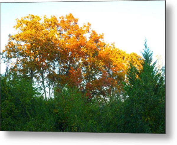 Autumn Sunlight Metal Print