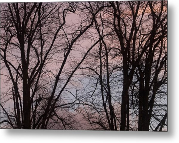 Autumn Trees Metal Print by Paul Muscat