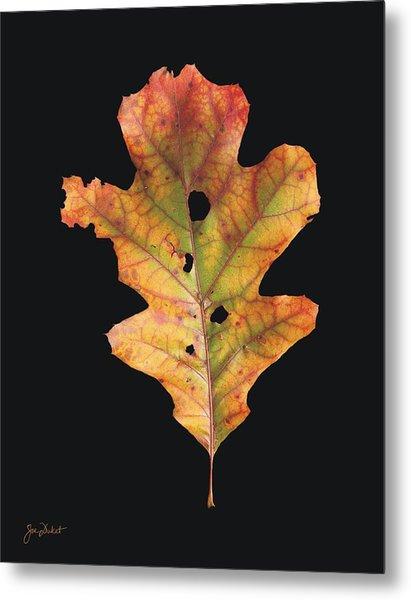 Autumn White Oak Leaf 2 Metal Print