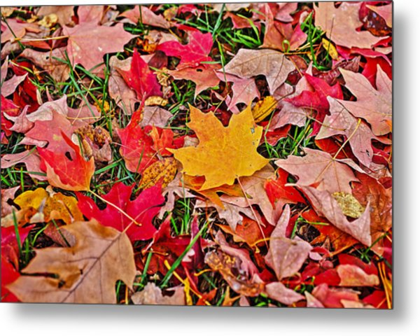 Autumn's Blanket Metal Print by SCB Captures