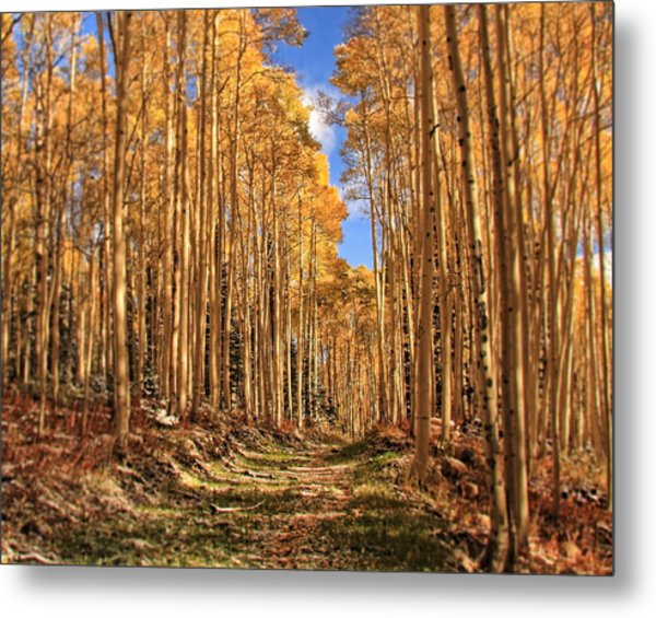 Autumn's Embrace Metal Print by Gene Praag