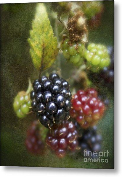 Autumn's Fruit Metal Print by Michelle Orai