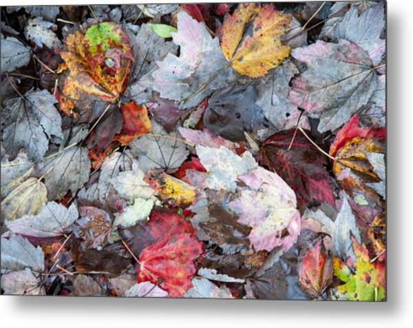 Autumn's Leaves Metal Print