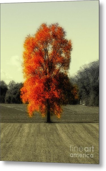 Autumn's Living Tree Metal Print