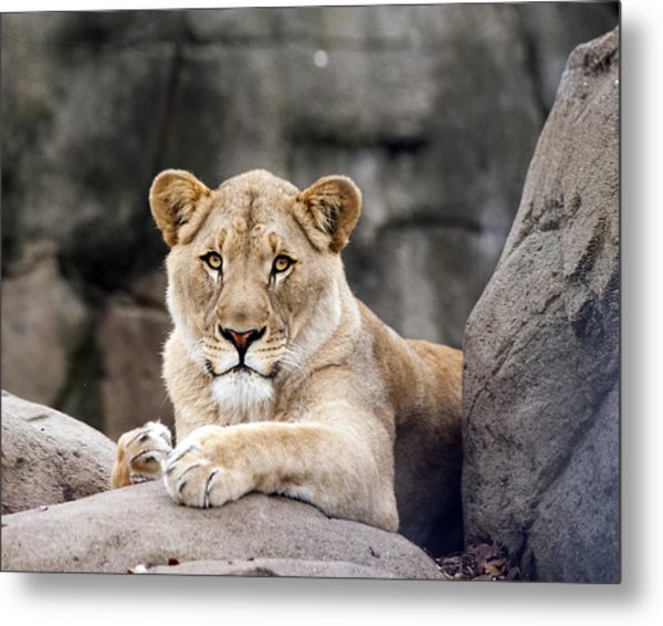 Awesome Cat Metal Print by Tammy Smith