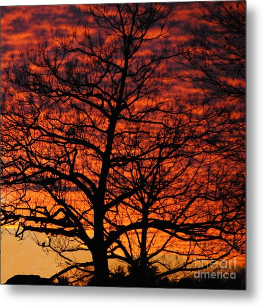 Awesome Winter Sunset - Longwood Gardens - Square Metal Print by Jacqueline M Lewis