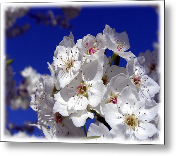 Awsome Blossoms Metal Print by Gerry Childs