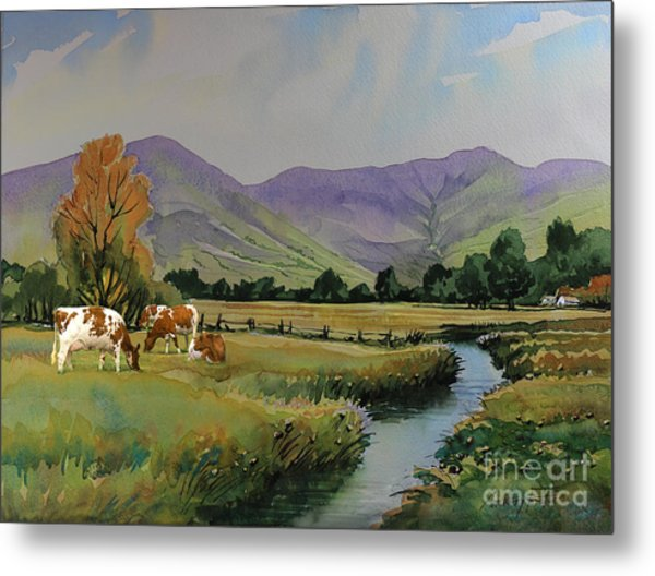 Ayrshire Cattle In Langdale Metal Print by Anthony Forster