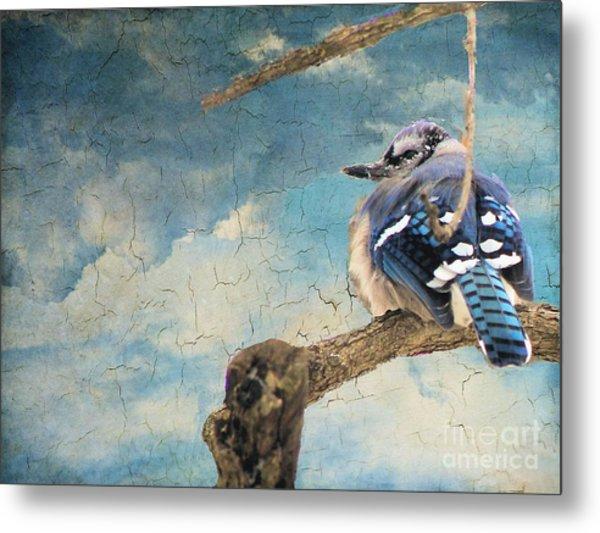 Baby Blue Jay In Winter Metal Print