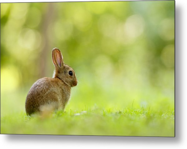 Baby Bunny In The Forest Metal Print