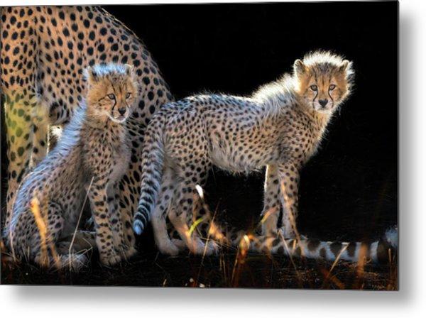 Baby Cheetahs Metal Print by Jun Zuo
