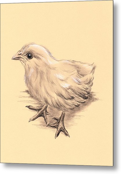 Baby Chicken Metal Print