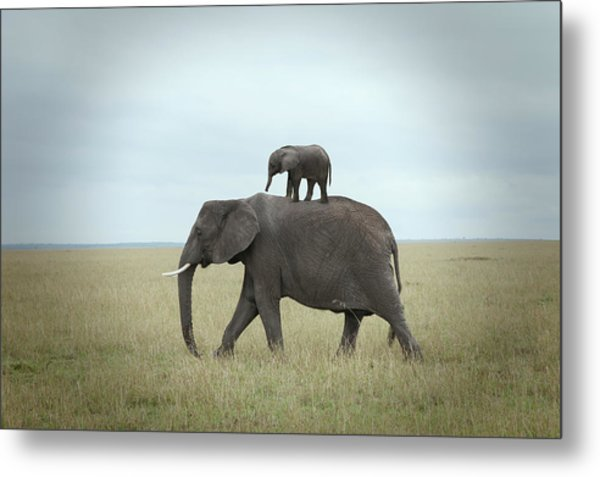 Baby Elephant On The Back Of His Mother Metal Print by Buena Vista Images