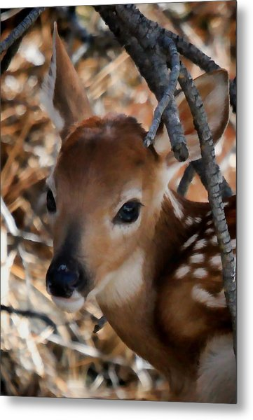 Baby Face Fawn Metal Print