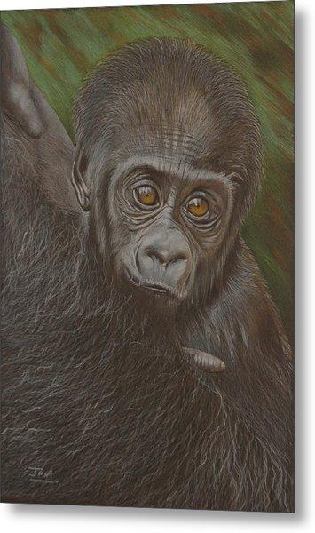 Baby Gorilla - Little Djemba Metal Print
